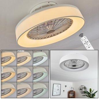 Moli Deckenventilator LED Weiß, 1-flammig, Fernbedienung